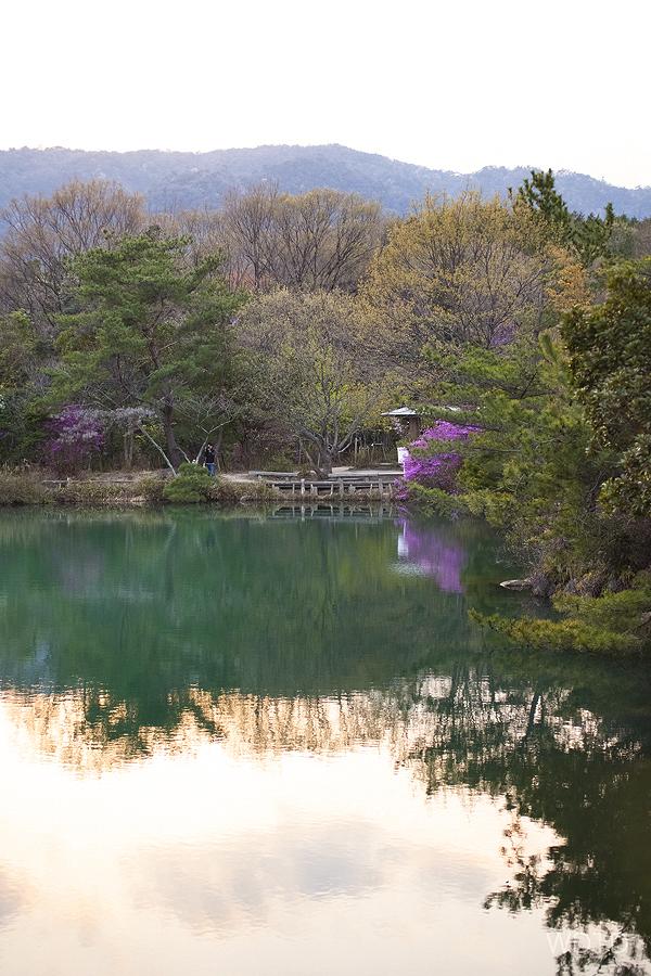 WDTD_Arashiyama_03