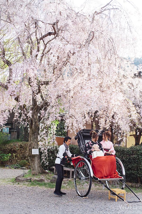 WDTD_Arashiyama_11