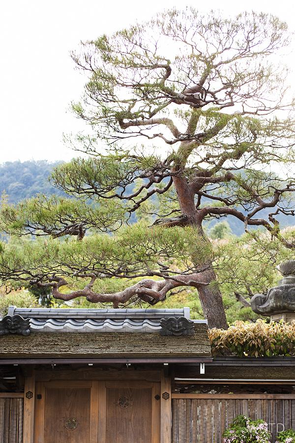 WDTD_Arashiyama_14