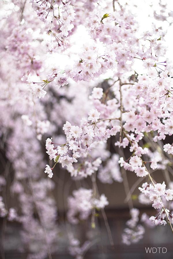 WDTD_Arashiyama_20